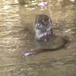 Otter Camel Trail River Camel