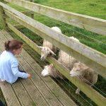 Dairyland-Farmworld-Cornwall