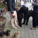 dog-friendly-cornwall