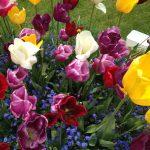 Flowers-cornwall