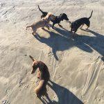 Dog friendly holiday Cornwall