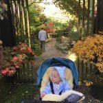 Beautiful peaceful garden in Cornwall