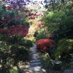 Autumn colours at the Japanese Garden