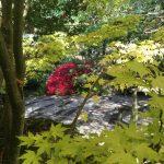 Japanese bonsai gardens in Cornwall