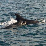 Cornish sea life