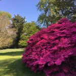 Cornwall gardens open for visitors