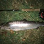 Sea trout fishing Cornwall