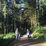 Local Forestry Commission site full of enchanting trails