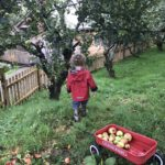 cornish orchard apple pressing